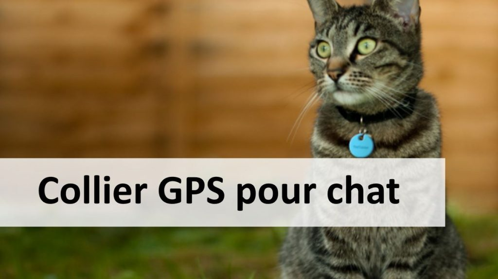 Collier GPS pour chat